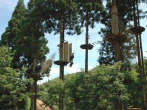 プランの魅力 The most thrilling Tarzan swing! の画像