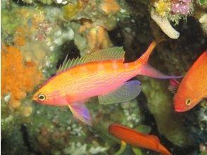 プランの魅力 Beautiful fish welcome you の画像