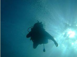 プランの魅力 海の中でリフレッシュ! の画像