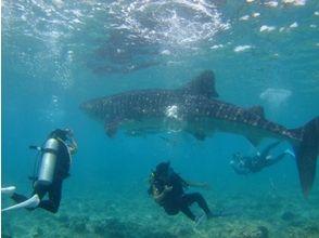 プランの魅力 どんな魚に出会えるかは潜ってのお楽しみ! の画像