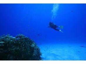 【沖縄・慶良間】体験ダイビング(ビーチエントリー)の魅力の説明画像