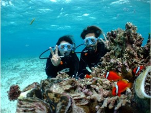 プランの魅力 您可以享受潜水。 の画像