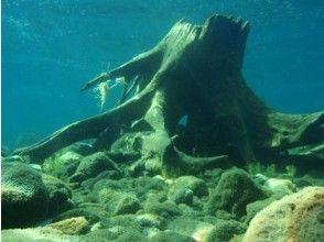 プランの魅力 Let's take a peek inside the driftwood の画像