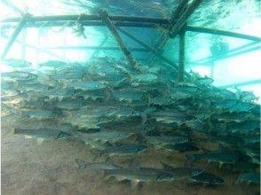 プランの魅力 様々な淡水魚 の画像