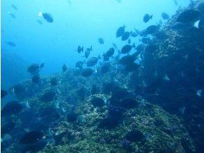 プランの魅力 Enjoy the underwater world の画像
