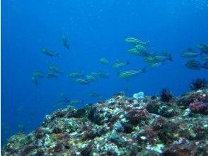 プランの魅力 Can approach sea creatures の画像