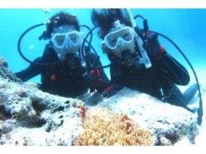 【沖縄】ゆったりダイビングでクマノミに出会おう!クマノミと潜ろう(ビーチ体験ダイビング)の魅力の説明画像