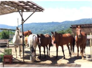 プランの魅力 Gentle horses are waiting. の画像
