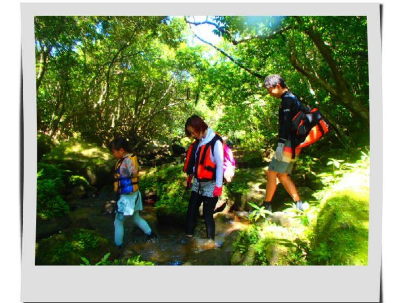 プランの魅力 森林浴! の画像