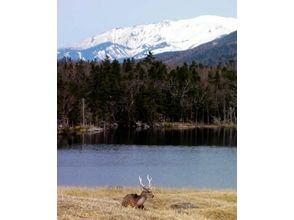 プランの魅力 自然の中で動物に出会えるかも!? の画像