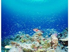 【沖縄県恩納村】熱帯魚体験ダイビング(初心者歓迎☆ライセンス[Cカード]不要)の魅力の説明画像