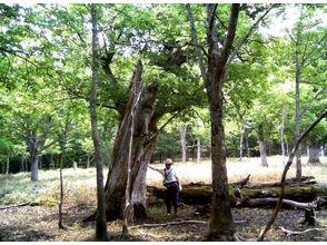 プランの魅力 森を散策します! の画像