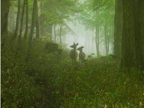 プランの魅力 自然の中で動物に出会えるかも?! の画像