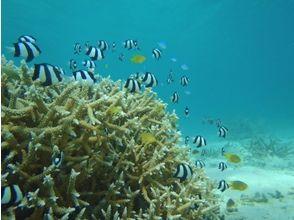 プランの魅力 海の中は別世界。たくさんの魚に出会えます。 の画像