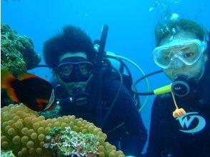 【沖縄・石垣島】技術アップ!ダイビングランクアップコースの魅力の説明画像
