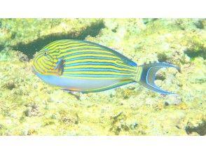 プランの魅力 カラフルなお魚達 の画像