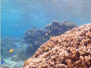 プランの魅力 面白い地形とサンゴ の画像