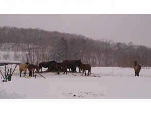 [Hokkaido Kitahiroshima] attractive description image of horse trekking (outside the square 60 per minute)