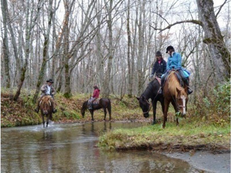 プランの魅力 お好きな馬をチョイス の画像