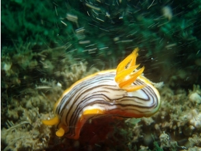 【神奈川・江の島】体験ダイビングの魅力の説明画像