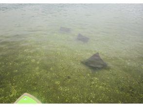 【兵庫・淡路島】初心者にうれしい! 穏やかな内海で魅力たっぷりのSUP体験!!の魅力の説明画像