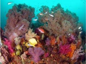 プランの魅力 海中のお花畑のよう の画像
