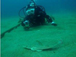 プランの魅力 目の前を大きな魚たちが の画像