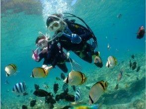 プランの魅力 水中写真がとにかくキレイ!! の画像