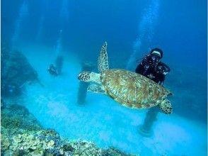 プランの魅力 ウミガメと遭遇できるかも の画像