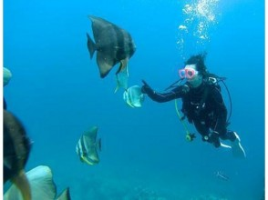 プランの魅力 熱帯の魚たちは人懐っこい の画像