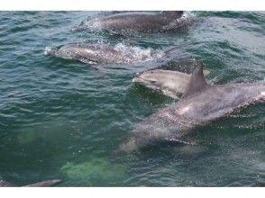 プランの魅力 小海豚 の画像