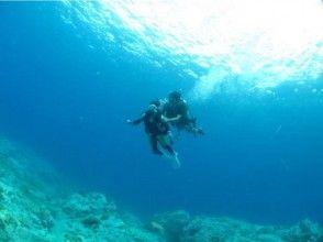 プランの魅力 Welcome to the world in the sea! の画像