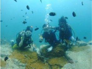 プランの魅力 The best fun of diving is to interact with the fish の画像