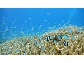 プランの魅力 珊瑚礁やイソギンチャクで遊ぶ魚たち の画像