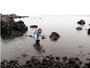 プランの魅力 桜島のダイビングポイント。溶岩もいっぱいゴロゴロしています の画像