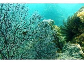 プランの魅力 海藻や岩石などで幻想的な風景 の画像
