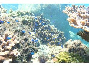 Enjoy the wonderful underwater scenery!