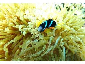 Let's find the popular anemone anemone!
