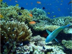 サンゴ礁へご案内
