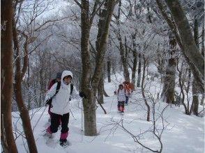 森林带步行