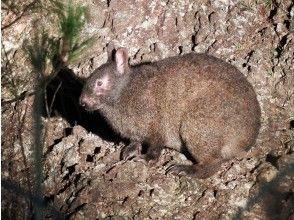 クロウサギを探して太古の森のドライブ