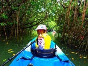 Jungle exploration on the mangrove river