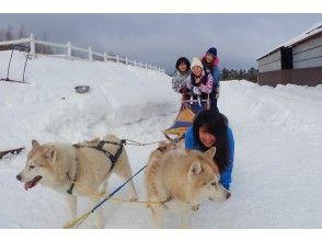 狗拉雪橇體驗