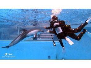 イルカと一緒に泳ごう!