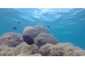 ⑤ 막상 체험 다이빙에! 부드러운 산호에 모이는 많은 예쁜 물고기들. 물고기 먹이주기 체험과 수중 카메라로 촬영도 할 수 있어요.