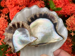 通常サイズと大きな真珠が出てくるプレミアムサイズとお選び下さい☆育てている年数が異なるので貝殻のサイズも異なります!