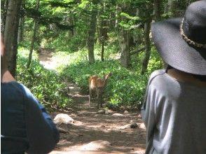 Encounter wild animals