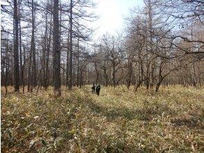 森の中の湯導管・管理道を進む