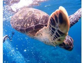 ウミガメと泳ごう!