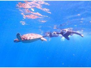 目の前をウミガメが泳ぐことも!